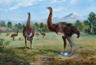 Dinornis giganteus