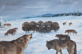 vlk-pizmon